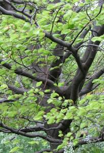 tree_p